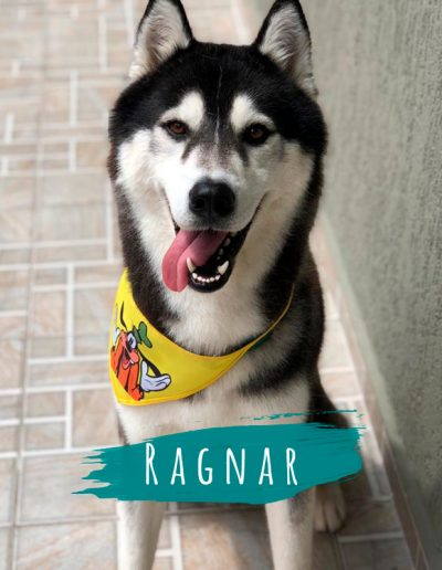 ragnar-pet-shop-karecone